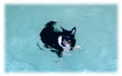 Dogs love swimming and playing in the pool.